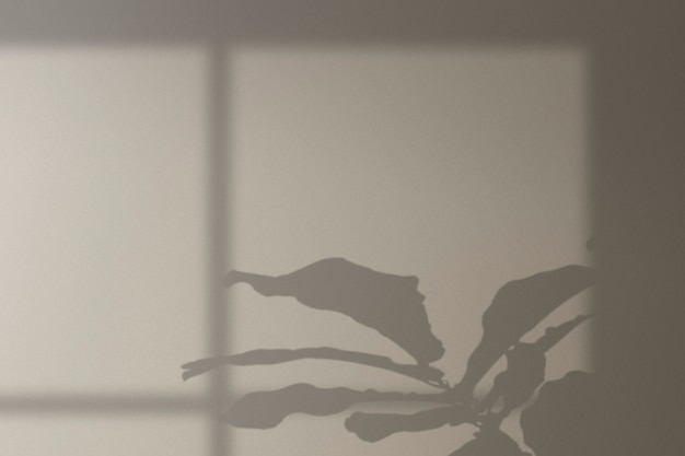 Arrière-plan avec arbre de monstera et ombre de fenêtre