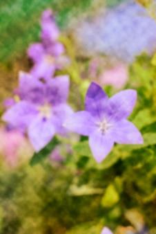 Arrière-plan flou abstrait de la fleur de ballon
