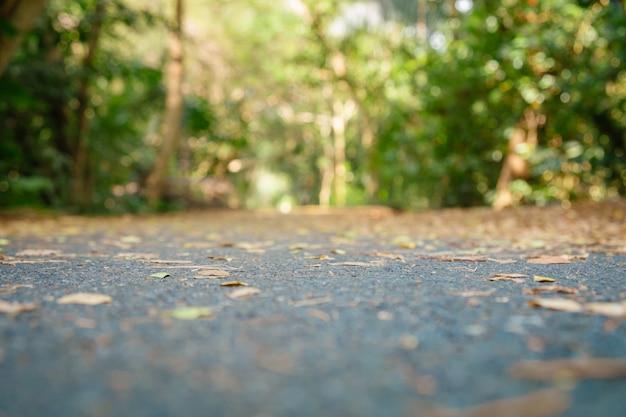 Arrière-plan flou abstrait de la forêt tropicale au feuillage vert en été.
