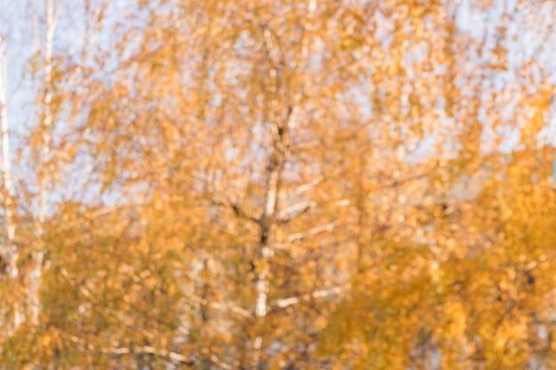 Arrière-plan flou des arbres de l'automne