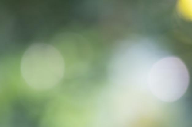 Arrière-plan flou, congé et arbre