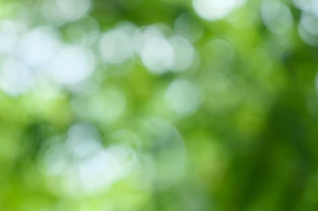 Arrière-plan flou de feuilles vertes sur l'arbre avec bokeh vert vert clair avec un jaune flou th
