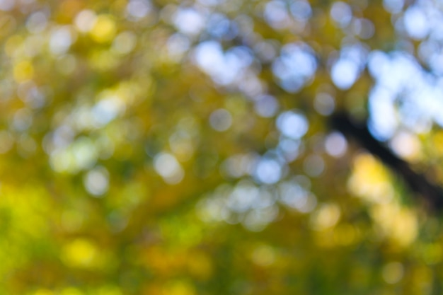 Arrière-plan flou jaune