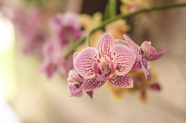 Arrière-plan flou motif de fleurs d'orchidée pourpre