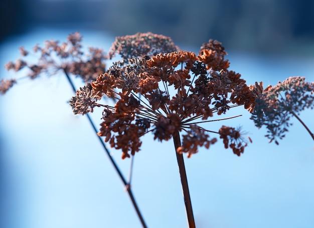 Arrière-plan flou de plante presque automne