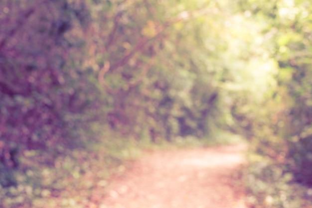 Arrière-plan flou: sentier pédestre dans une forêt tropicale luxuriante. belle matinée d'automne dans la forêt. chemin dans la forêt profonde. forêt sombre et une route. images de style rétro effet vintage.