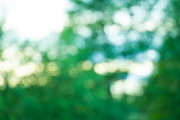 Arrière-plan flou vert bokeh vert sur fond de feuillage de mise au point. arrière-plan flou abstrait bio vert frais.