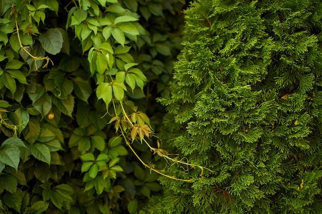 Arrière-plan flou vert naturel au soleil, bokeh rond abstrait de feuilles vertes