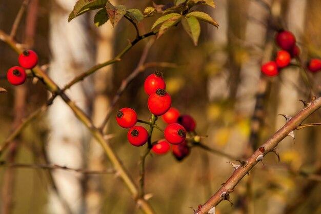 Arrière-plans de différentes plantes dans la forêt d'automne. couleurs vives de la nature de la forêt d'automne.