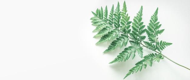 Arrière-plans de vraies feuilles tropicales sur blanc