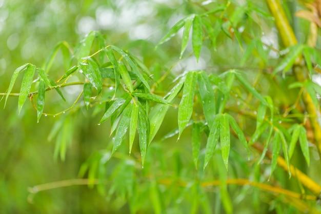 Arrière-plans zen naturel avec des feuilles de bambou
