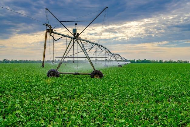 Arroser les betteraves dans un grand champ à l'aide d'un système d'arrosage automoteur avec une balançoire centrale technologies agricoles modernes production industrielle de cultures agricoles copy space