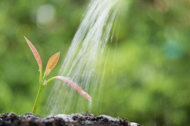 Arroser les jeunes plantes nouveau-nés poussant hors du sol à la lumière du soleil