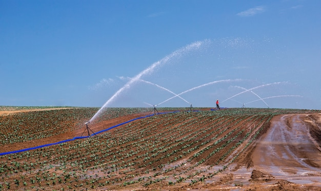 Arroseur automatique d'arrosage arroseur arrosant le champ du fermier au printemps. système d'irrigation par aspersion dans l'agriculture