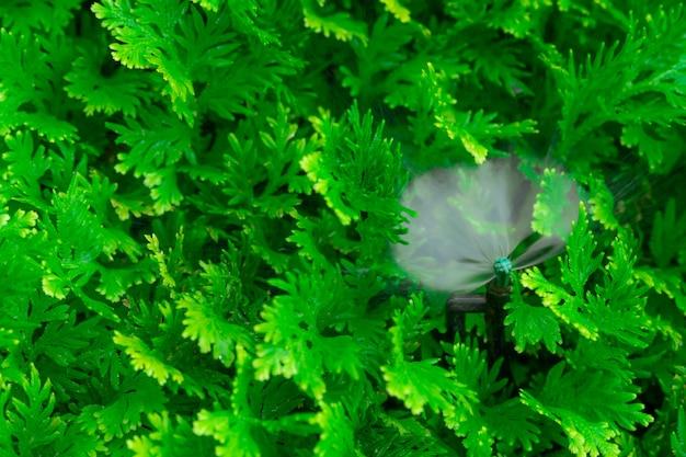 Arroseur automatique de pelouse arrosant la plante verte. arroseur avec système automatique. système d'irrigation de jardin arrosage de la pelouse. service d'entretien du système de gicleurs. arroseur d'irrigation à domicile.