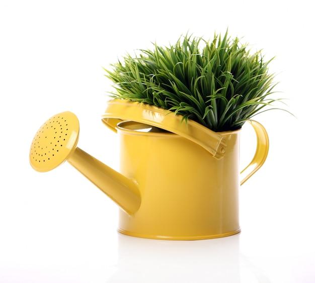 Arrosoir et herbe