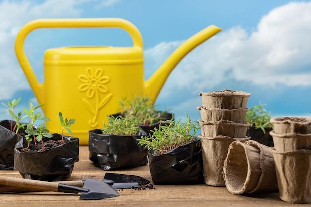 Arrosoir jaune pour arroser les micro-pousses sur fond de ciel bleu avec des nuages transplantation de semis dans des pots de tourbe concept de jardinage printemps