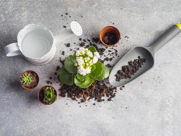 Arrosoir avec des semis et de la terre sur le plancher de granit
