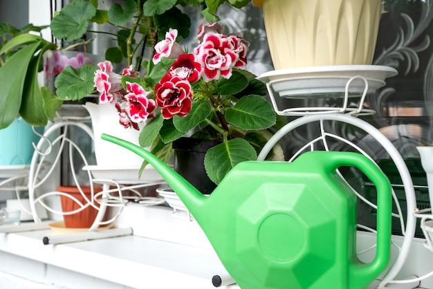 Arrosoir vert sur le rebord de la fenêtre parmi les pots de fleurs avec des plantes en fleurs