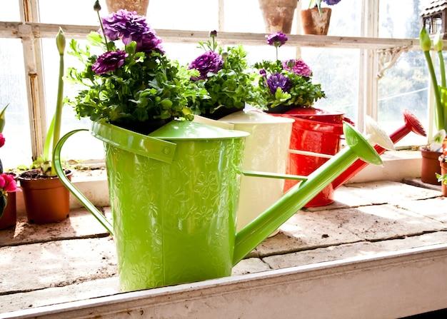 Arrosoirs, concept de jardinage et passe-temps