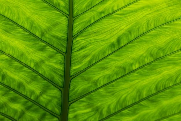 L'art de la feuille verte
