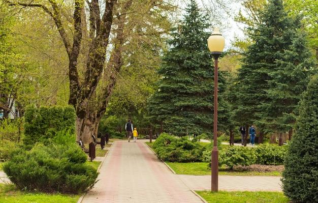 Art topiaire dans la conception du parc. genévriers cisaillés dans le parc d'automne de la station balnéaire de goryachy klyuch. fermer. parc paysager à feuilles persistantes. concept de nature pour la conception.