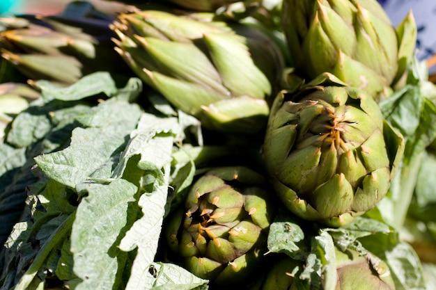 Artichauts verts frais
