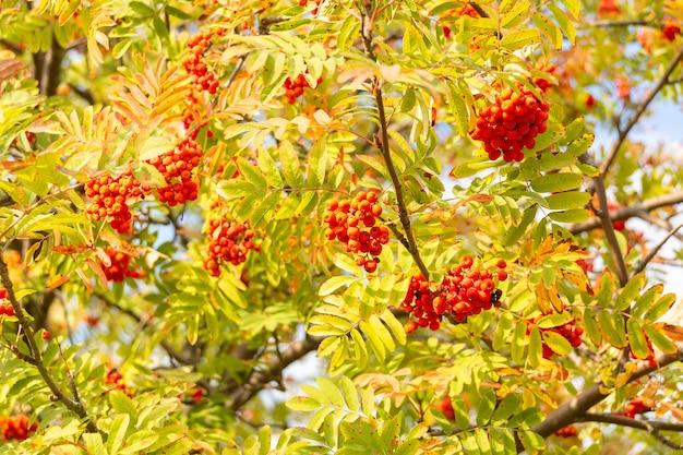 Ashberry contre le ciel