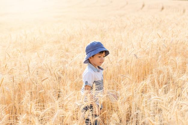 Asian boy s'amuser et jouer dans un champ de blé en été.