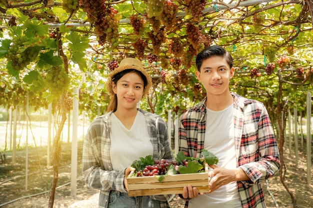 Asie agriculteur homme et femme récolte du raisin dans le vignoble avec caisse en bois concept de fruits biologiques sains