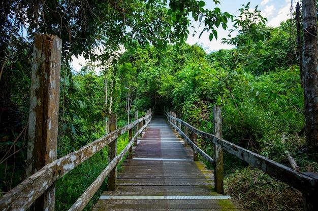 Asie du sud-est, attractions touristiques, malaisie, bornéo, sabah, sandakan, sentiers forestiers
