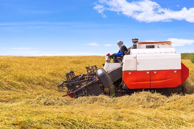 Asie et saison de récolte récolte du riz blé à la ferme