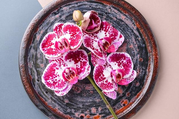 Assiette avec de belles fleurs d'orchidées sur bleu et rose