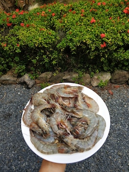 Une assiette de crevettes plus grosses. petit déjeuner fruits de mer.