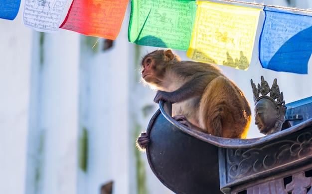 Assis sur le toit et regarder la faune singe animal à swayambhunath katmandou népal