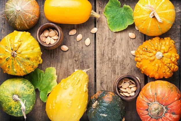Assortiment de citrouilles d'automne