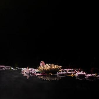Assortiment de concept de fleurs de bain de printemps