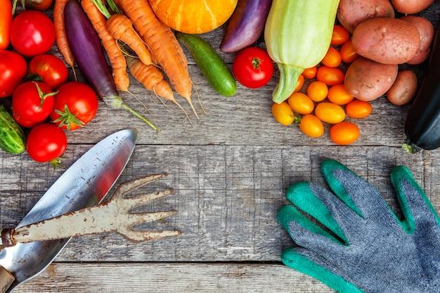 Assortiment de différents légumes biologiques et outils de jardinage à la campagne