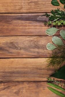 Assortiment de feuilles de plantes sur table