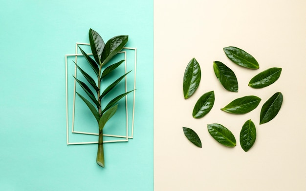 Assortiment de feuilles vertes à plat