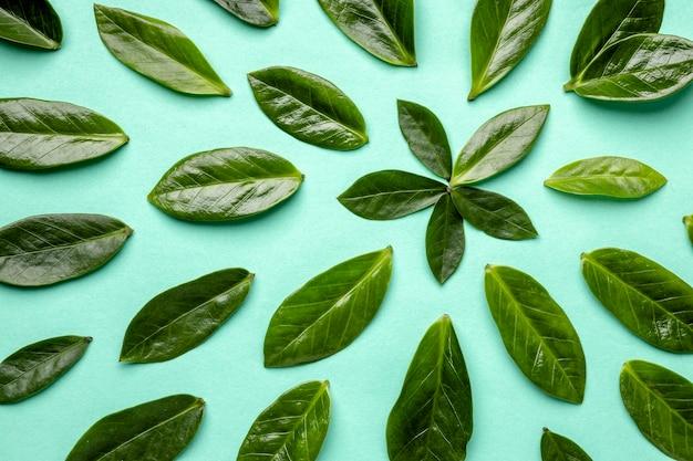 Assortiment de feuilles vertes vue de dessus