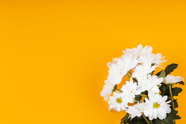 Assortiment de fleurs blanches avec espace copie