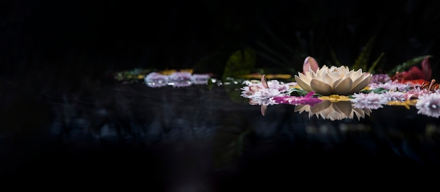 Assortiment de fleurs de source thermale