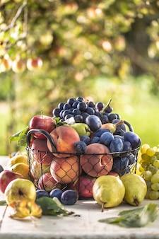 Assortiment de fruits frais sur une table de jardin dans une corbeille métallique.