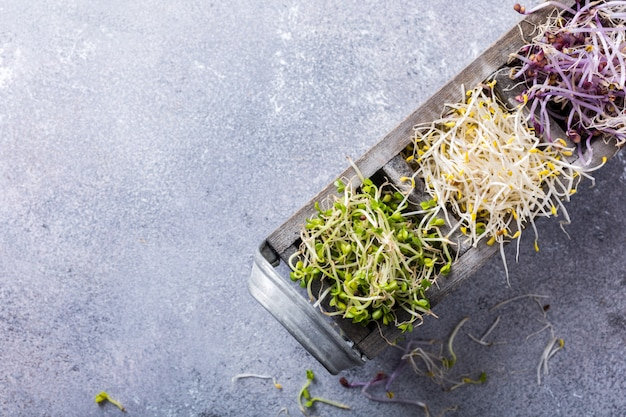 Assortiment de germes de légumes