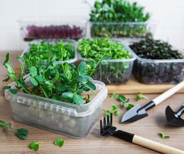 Assortiment de micro verts sur table en bois. mode de vie sain