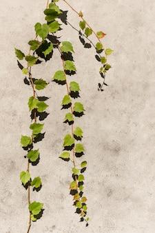 Assortiment minimal de plantes naturelles