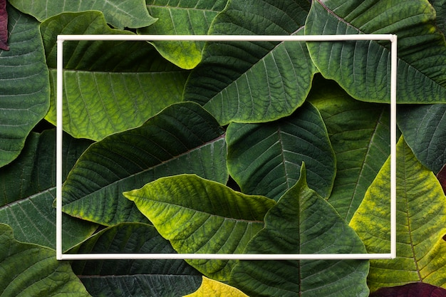 Assortiment plat de feuilles vertes avec cadre vide
