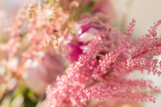 Astilbe et oeillets roses closeup fleurs au jour lumineux avec floue.
