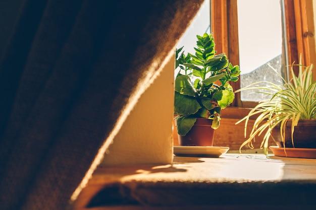 Atmosphère calme de fenêtre avec un soleil chaud et de petits pots de fleurs.